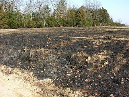 Burnt pasture