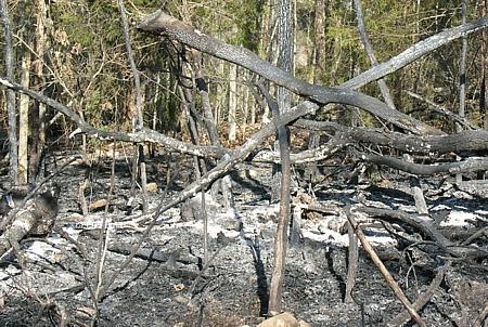 Partially burned debris