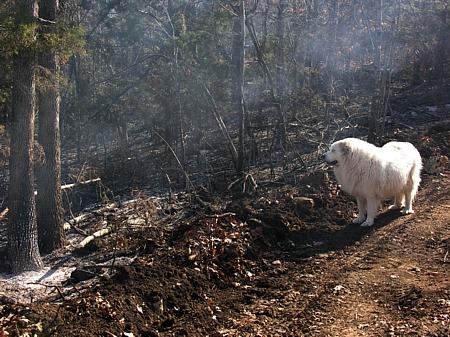 Gracie surveys the ashes