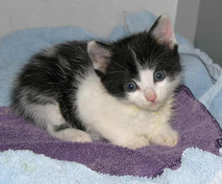 Unnamed kitten #1