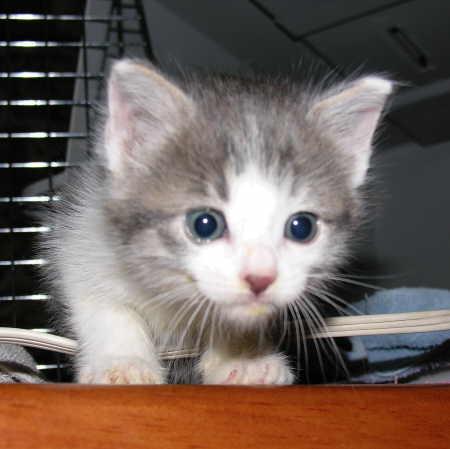 Unnamed kitten #2