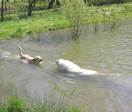 Gracie and George go for a swim