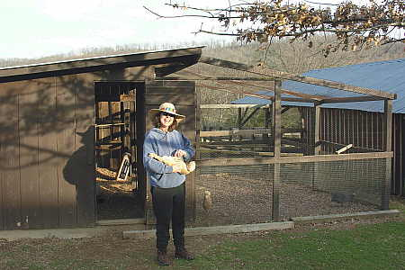 Free Standing Hen House