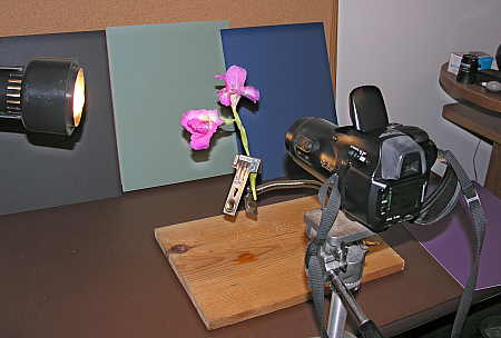 Macro stand in use