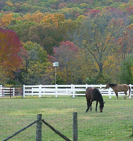 Purple Martin housing beside pasture