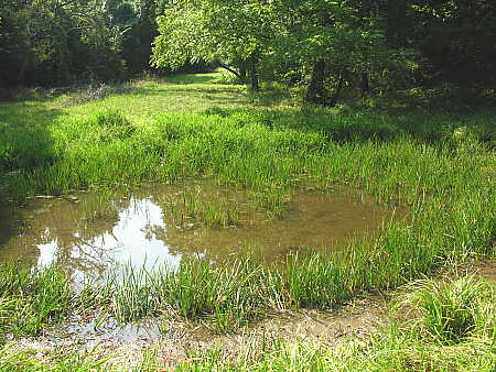 Small amount of water remains in the pond on August 6, 2006