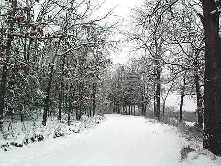 Access road in winter