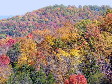 Hillside turning red