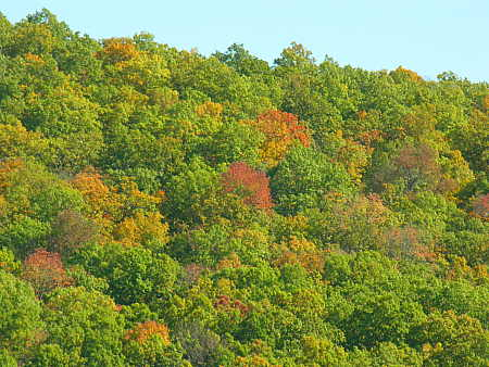 Hillside trees are beginning to change color