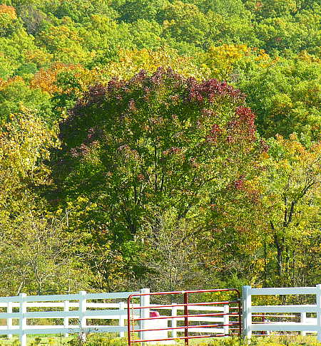 Behind horse pasture