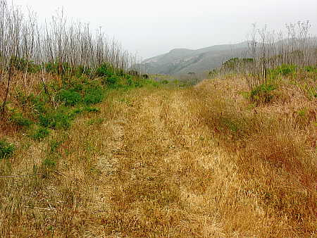 Interior trail on Santa Cruz Island