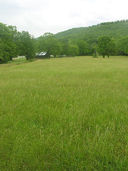 Fescue and clover
