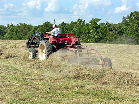 Raking grass into wind rows