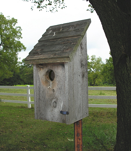 Established front-opening bluebird house