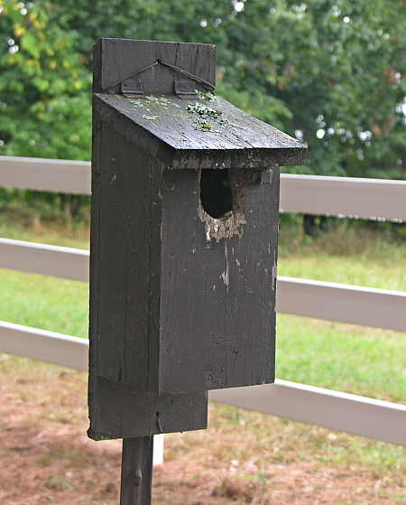 Hinged-top bluebird nesting box
