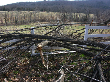 Ice Storm Damage (3)